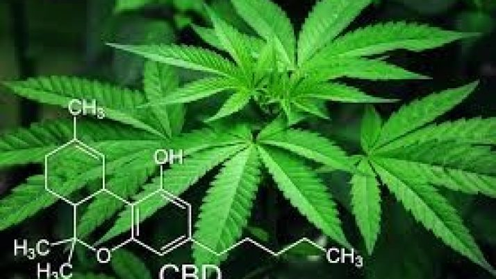 IP Branding  Rights for the Cannabis Businesses Industry