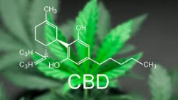 FTC Sends Warning Letters to CBD Companies Advertising Treatments for Serious Diseases